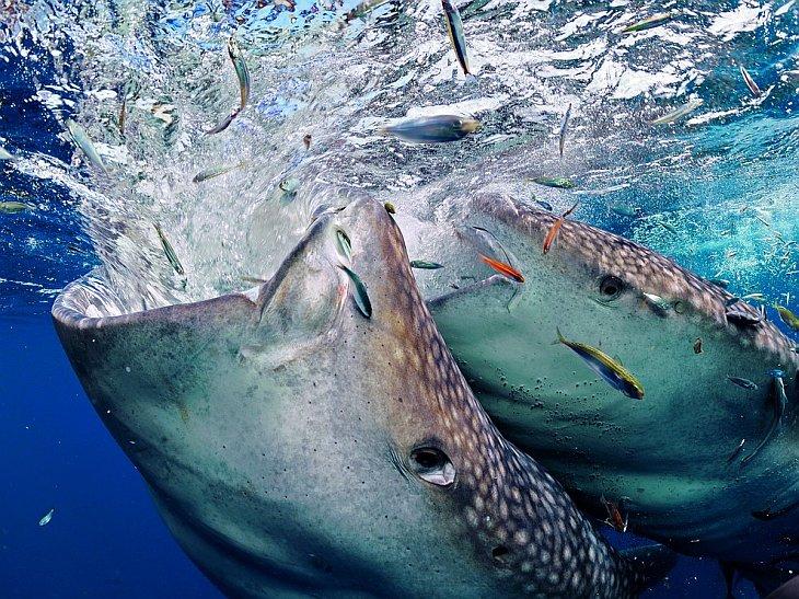 National Geographic: лучшие фотографии апреля