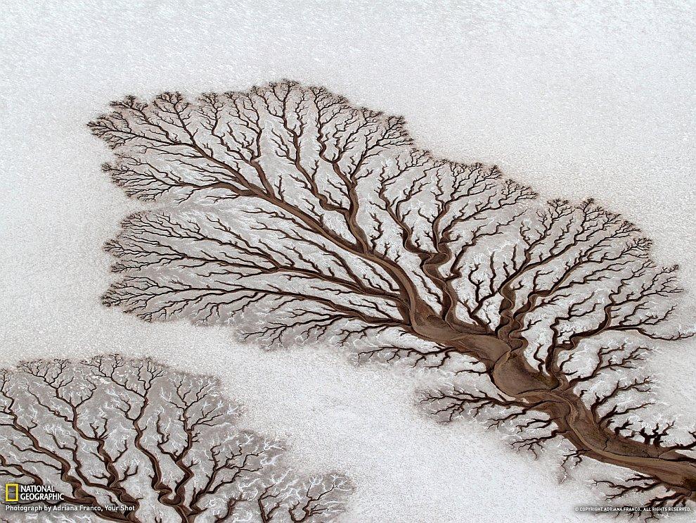 «Деревья» в пустыне