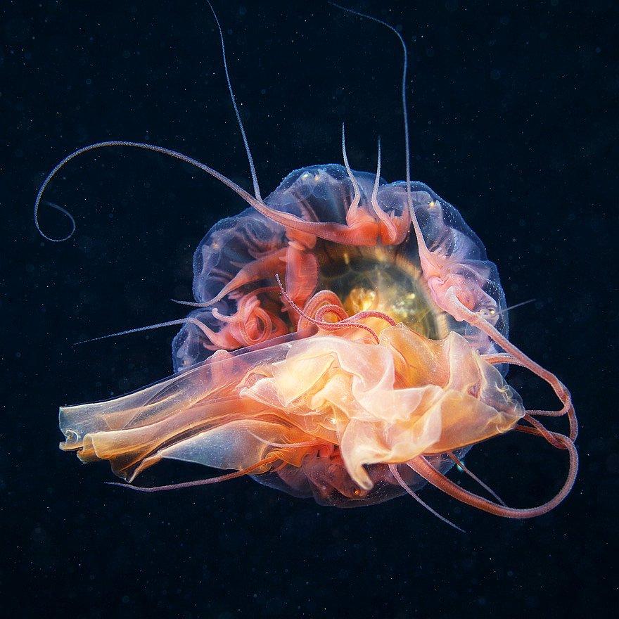 Medusa (tsianeya)