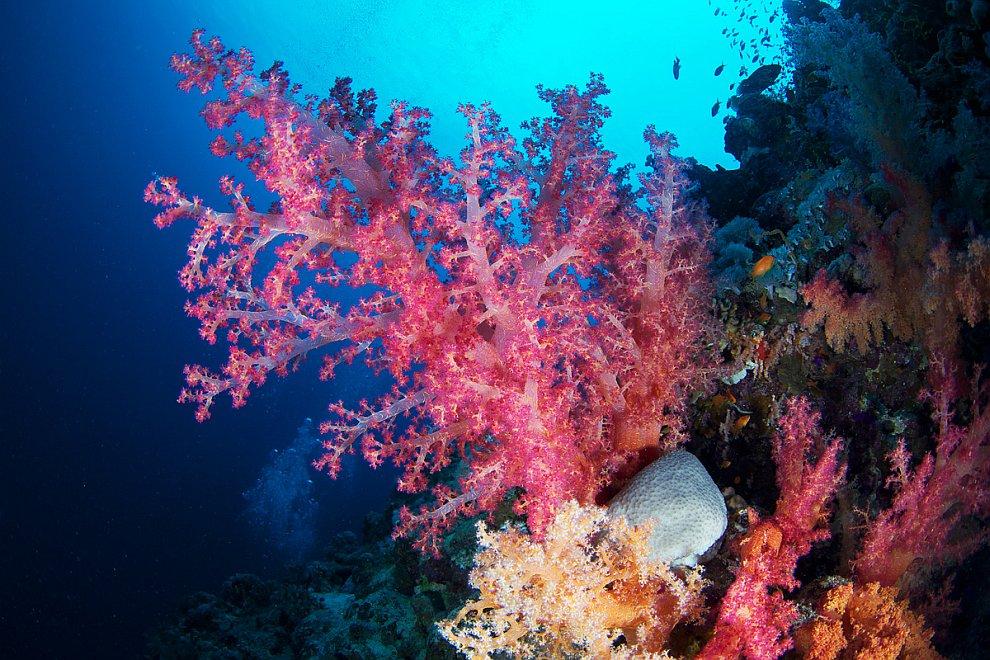 Картинки подводный мир коралы