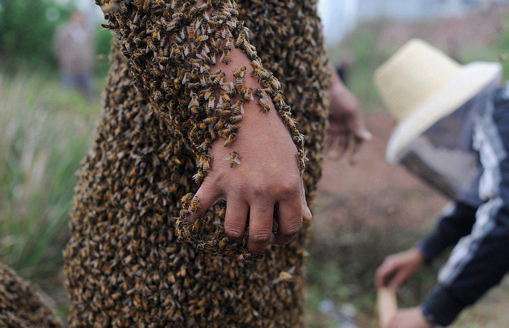Пчелы на теле