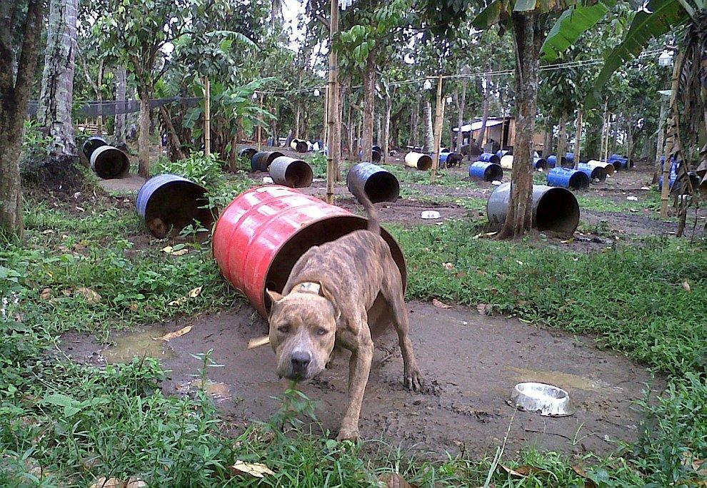 300 бойцовских собак