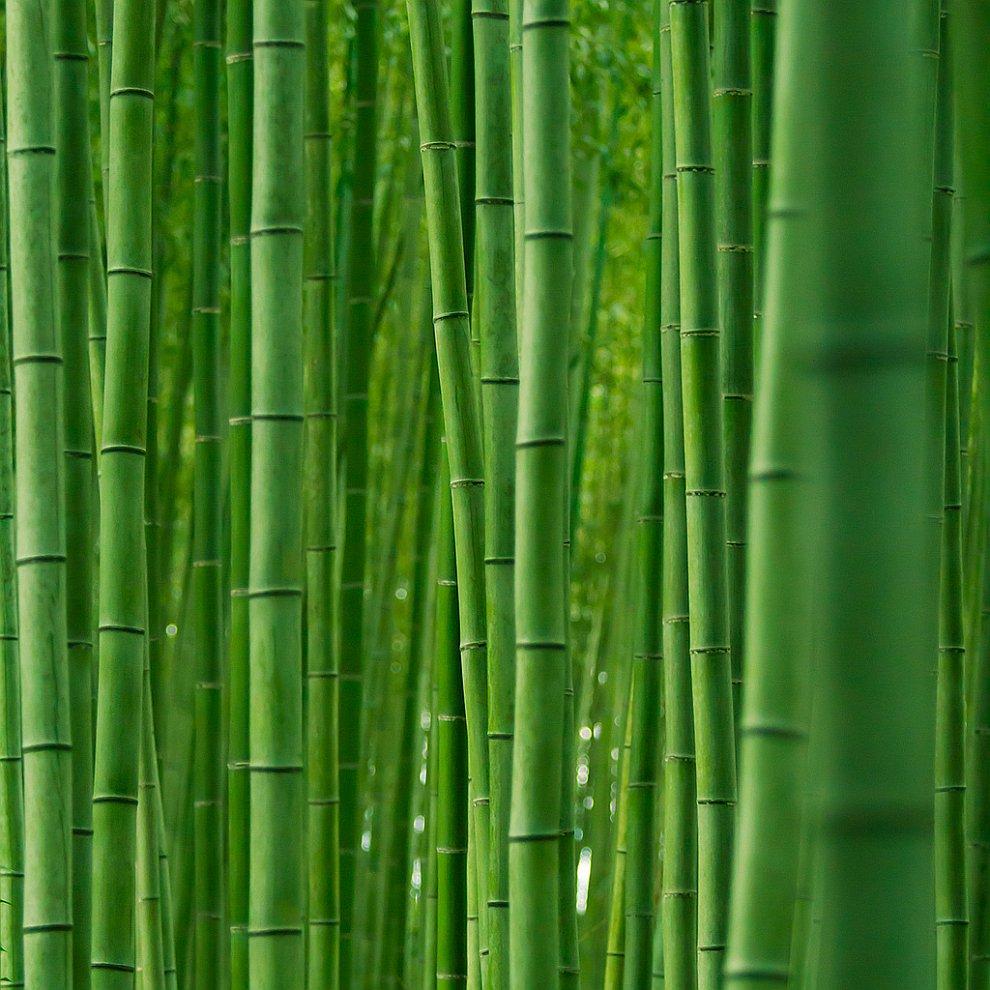Раньше и в настоящее время из бамбука