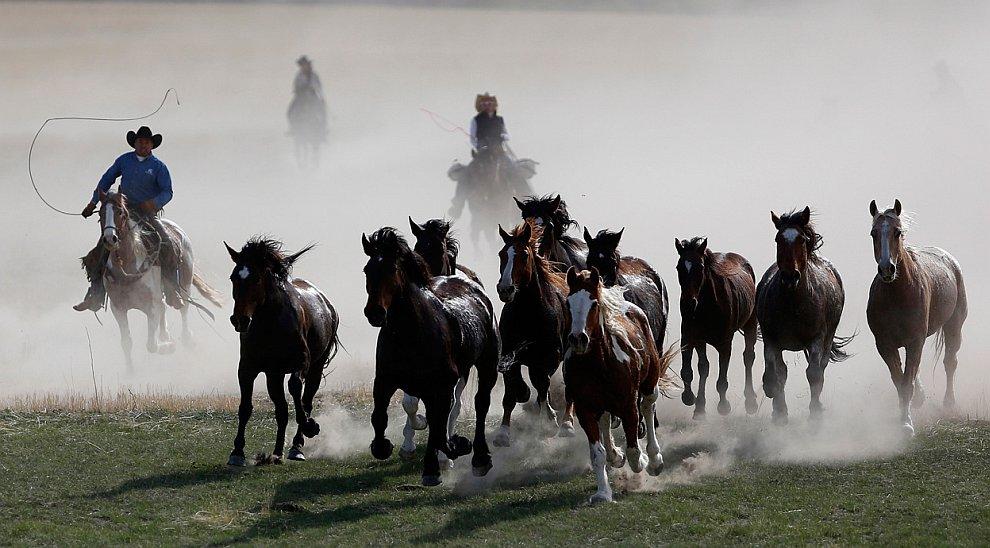 Страна настоящих ковбоев