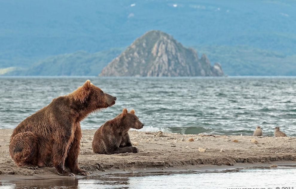 Курильское озеро, Россия