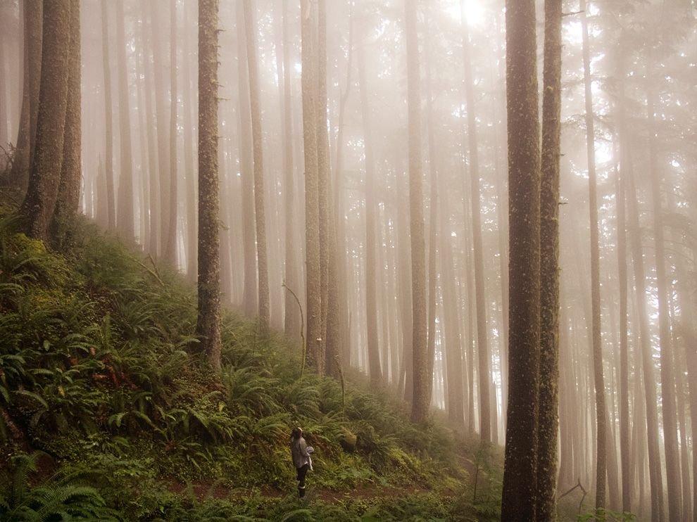 Таинственный лес в штате Орегон