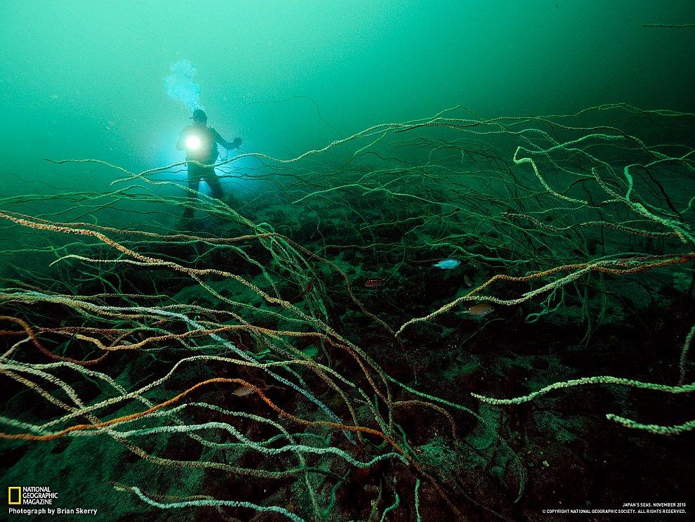 Глубоководный коралл