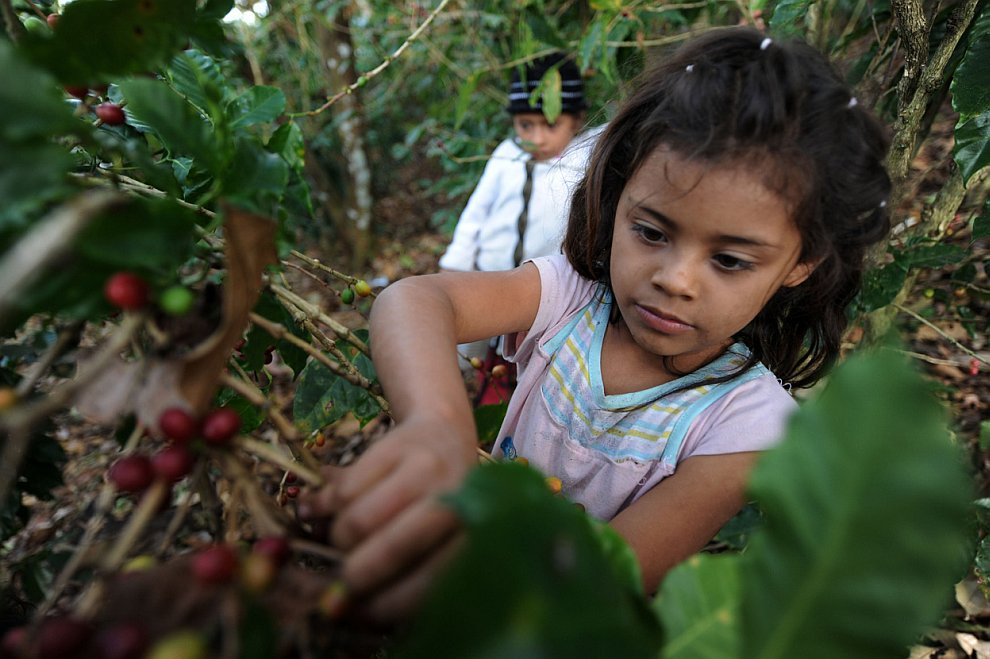child labor in guatemala essays Child labour is a global problem it is more common in underdeveloped countries child labour, by and large, is a problem of poor and destitute families, where parents cannot afford education of their children.