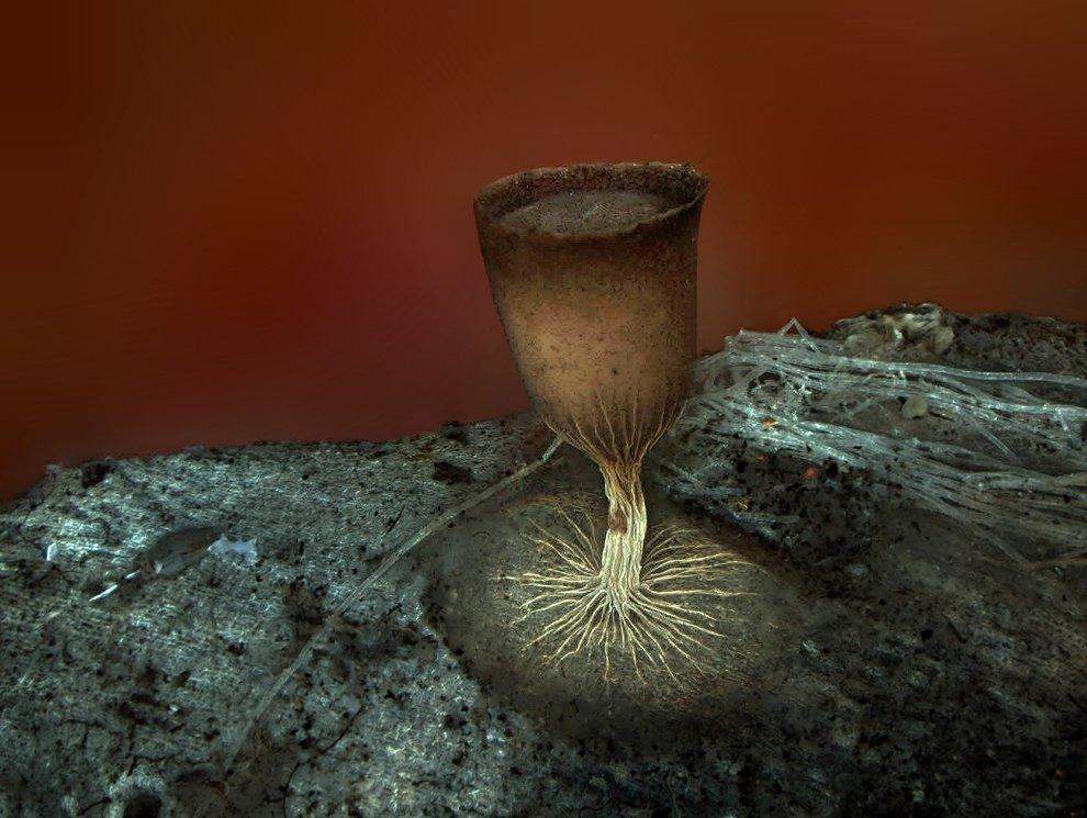 Слизевик (грибной организм)