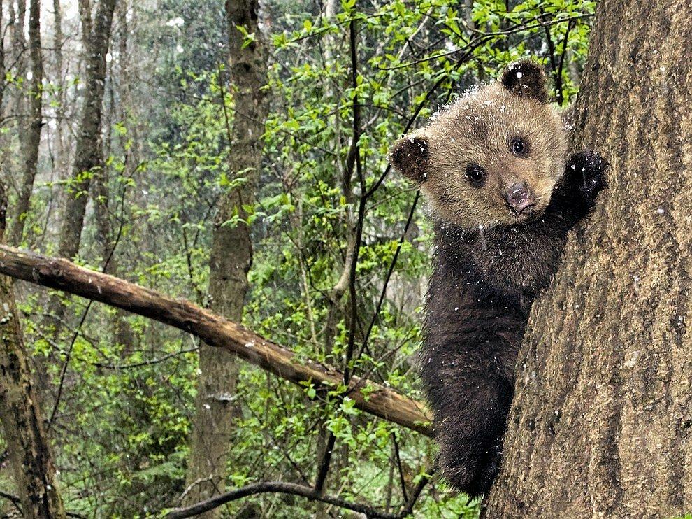 Медвежонок из деревни Бубоницы