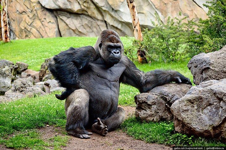 Крупнейший зоопарк в Европе