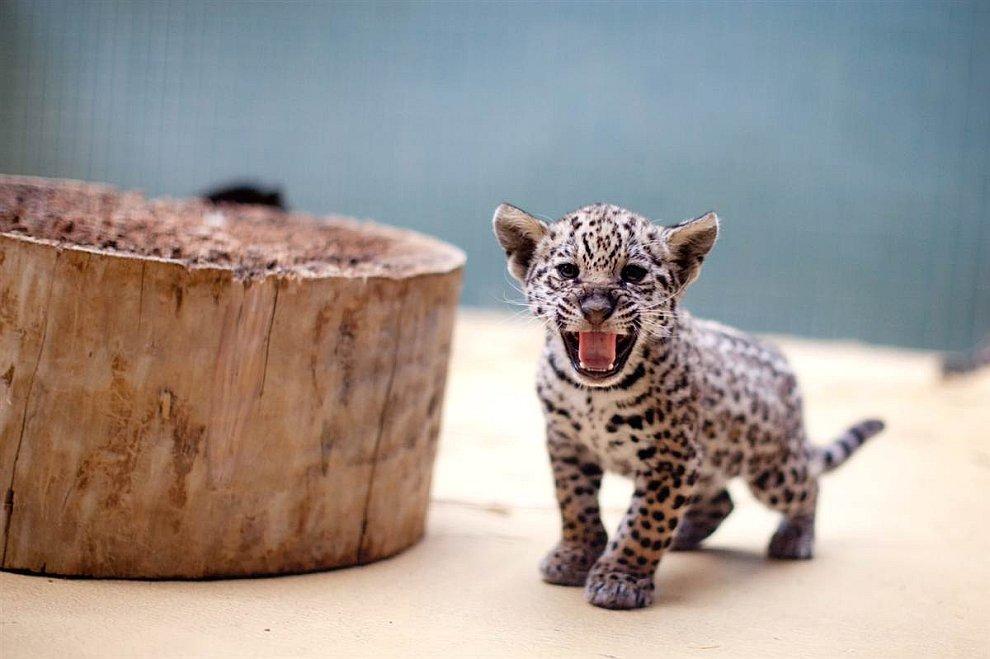 Маленький хищник