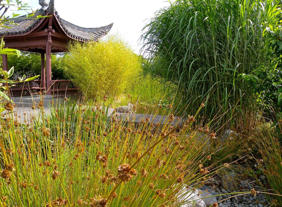 Китайский сад Сиэтла (США)