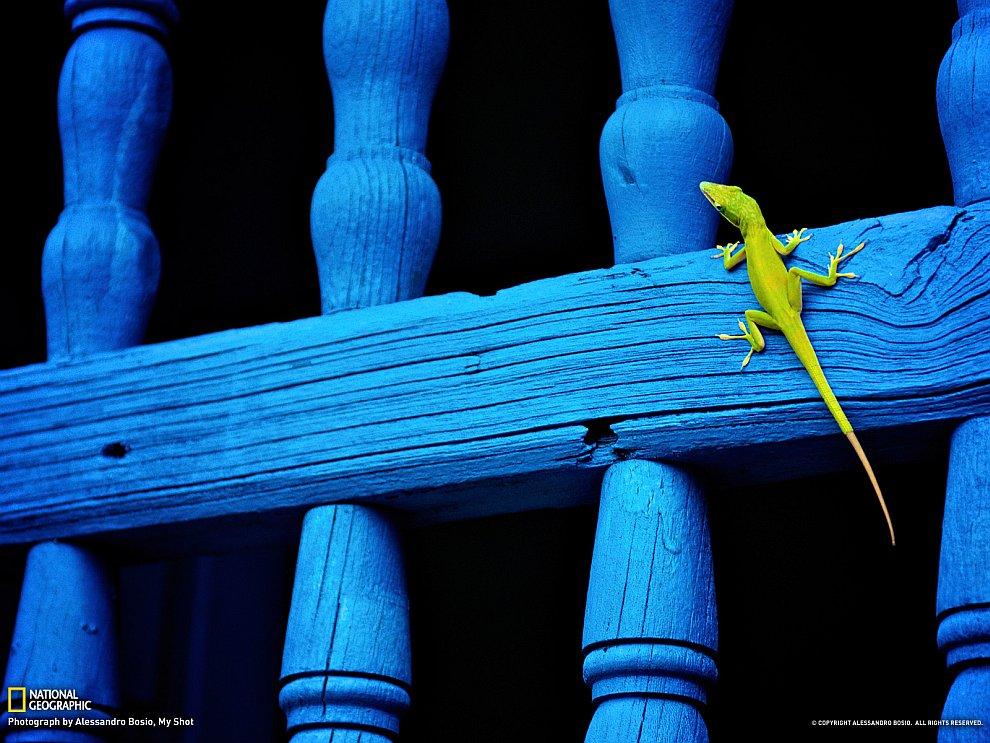 Маленькая ящерка на Кубе