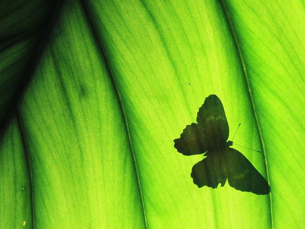 Бабочка на листе, штат Техас