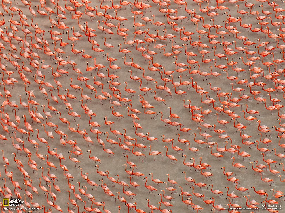 Стая фламинго, Мексика