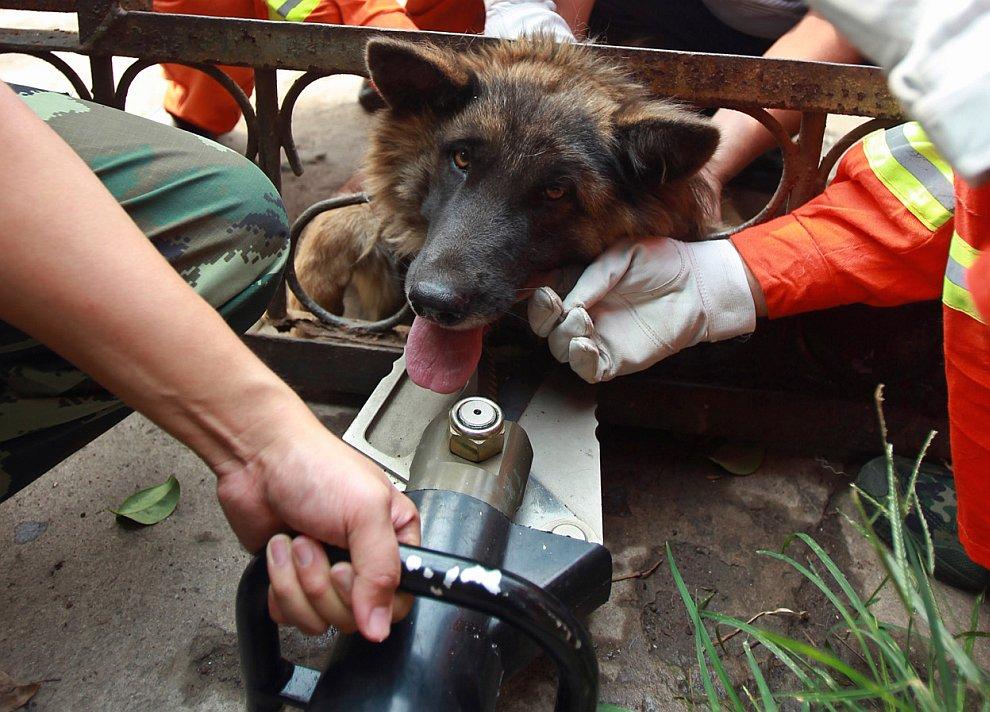 Пожарные с помощью гидравлических инструментов спасают собаку