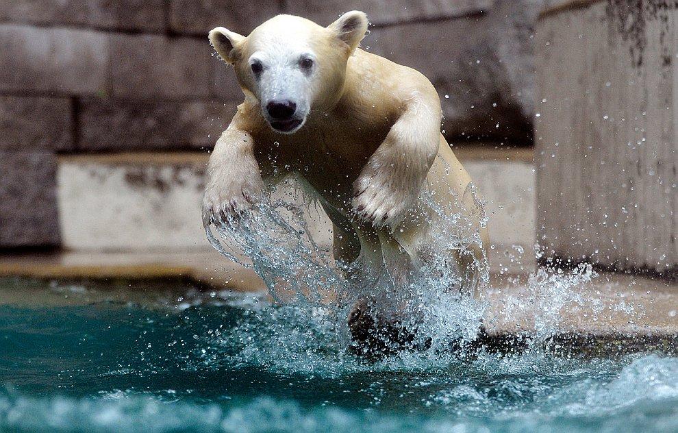 5-месячный белый медведь