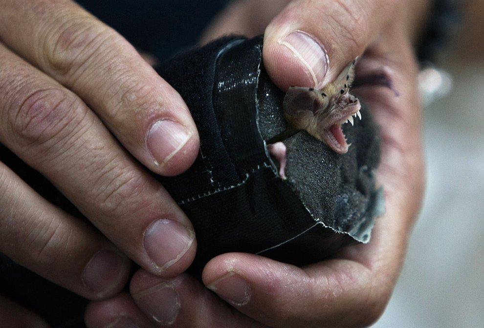 Израильские ученые изучают летучих мышей