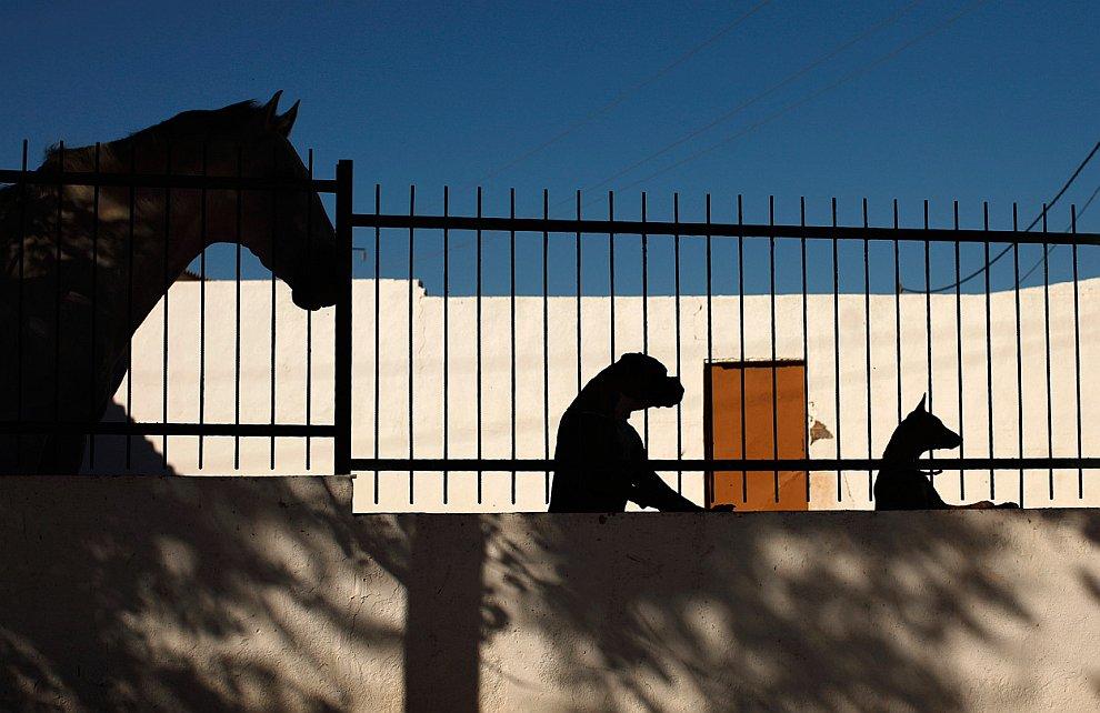 Просто интересный кадр: силуэты лошади, боксера и андалузской собаки
