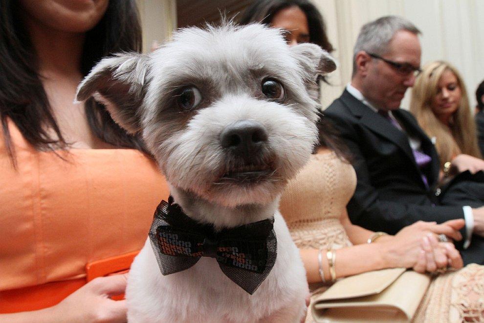 Самая дорогая в истории собачья свадьба