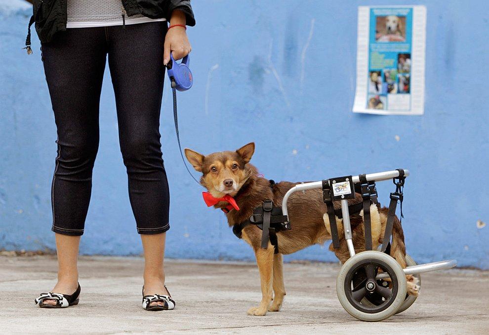 Собачка-инвалид по кличке Рождество
