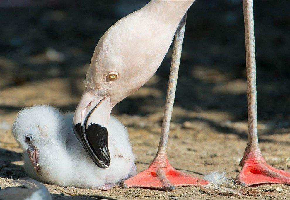 Дружелюбный фламинго