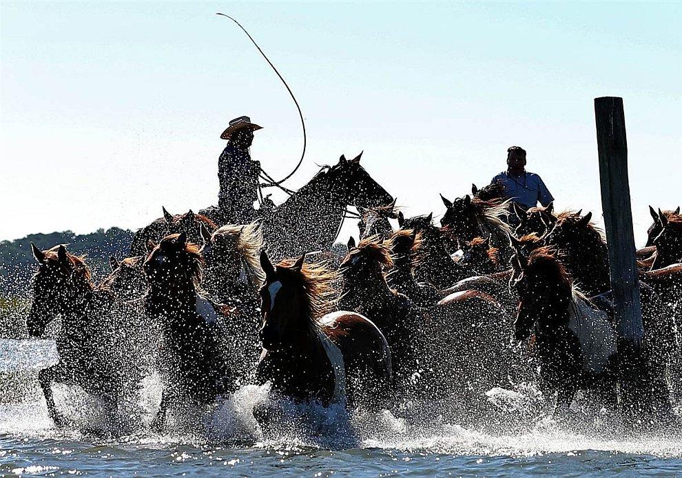 Выгул коней в штате Вирджиния