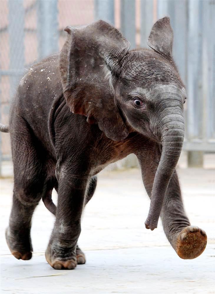 Жизнерадостный слоненок