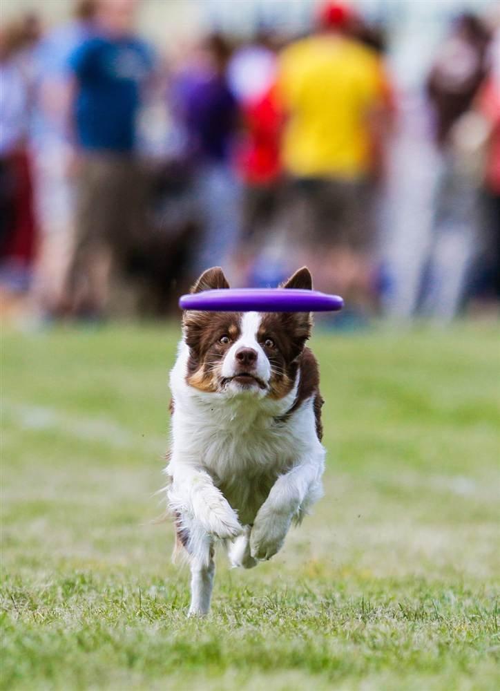 Спортивные соревнования среди собак в Польше