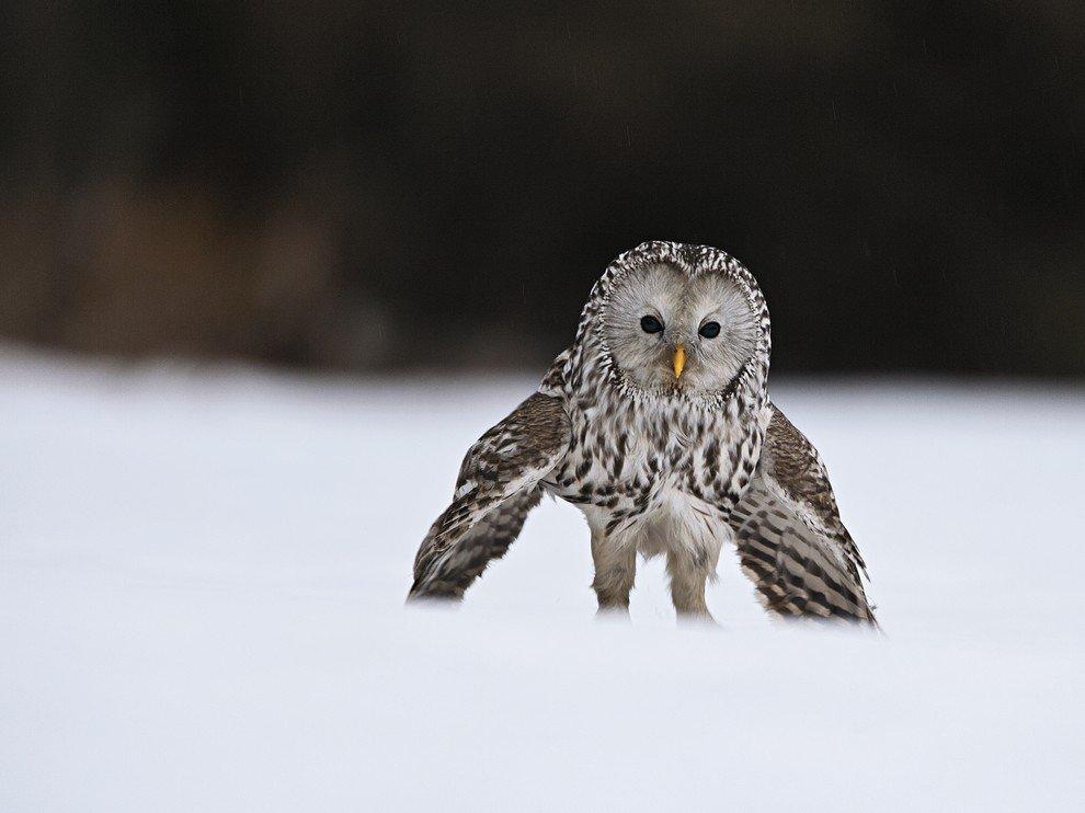 Летящей походкой
