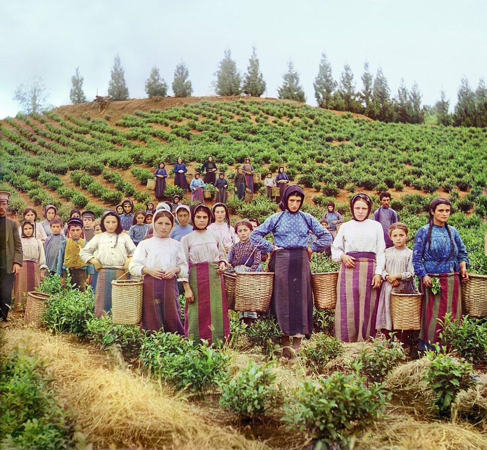 Группа рабочих на сборе чая в Грузии. Гречанки, 1915 год