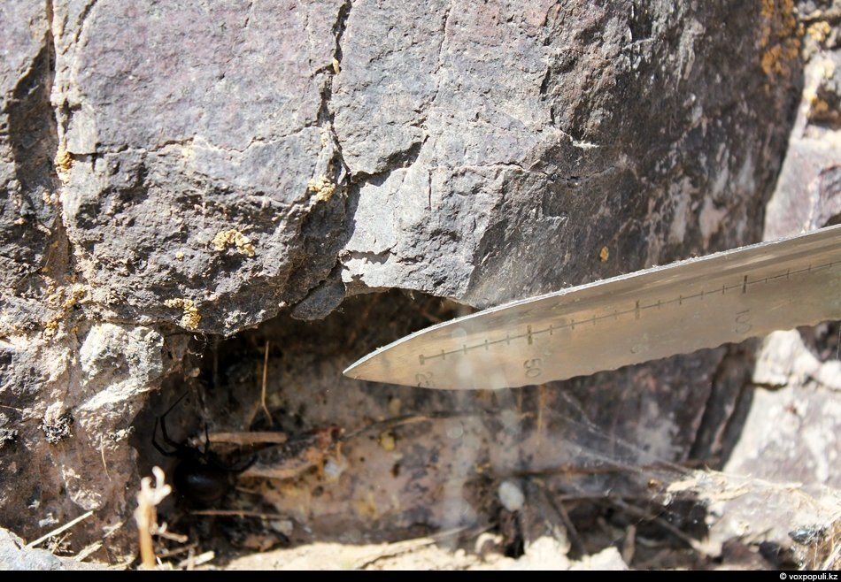 Одно из любимых мест обитания каракурта — основания скал