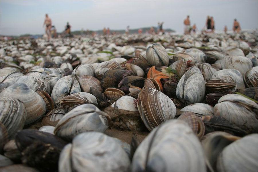 Морские дары тайфуна «Болавен»