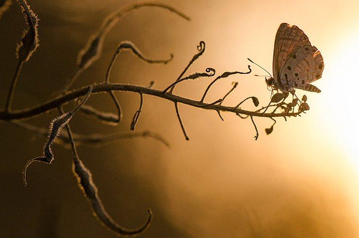 Лучшее с конкурса фотографии National Geographic 2012