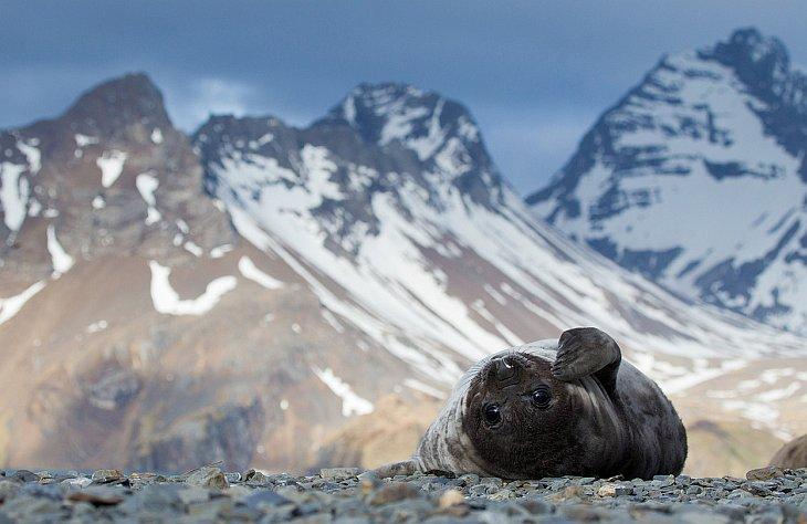 Маленький тюлененок