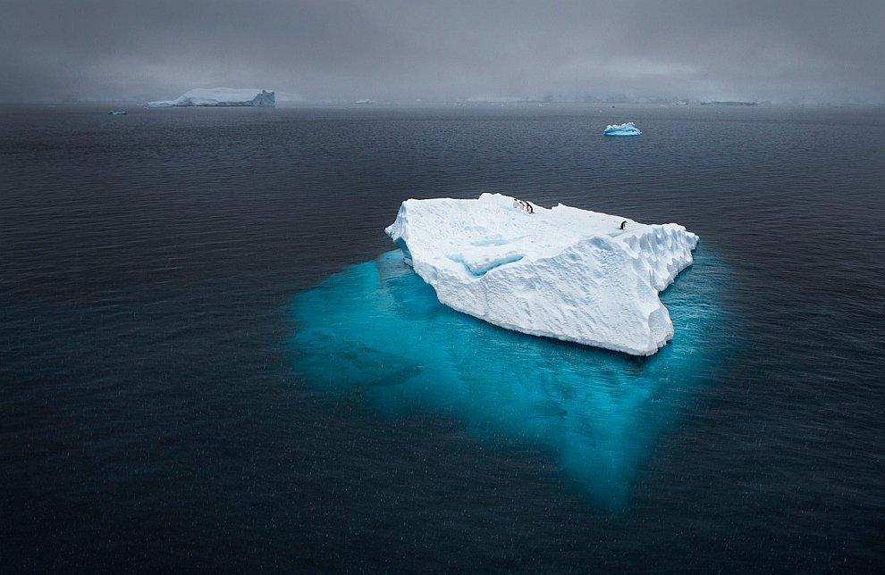 Пингвины на айсберге в Антарктиде