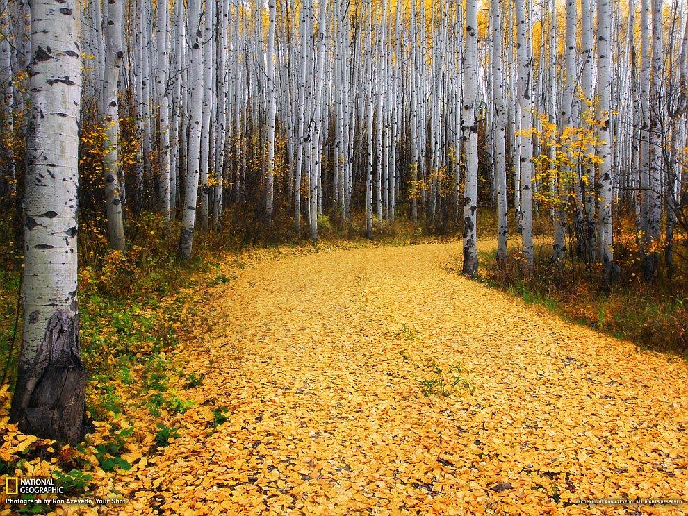 Осенний лес, Колорадо
