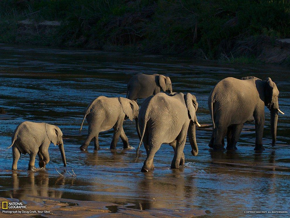 Семья слонов, Южная Африка