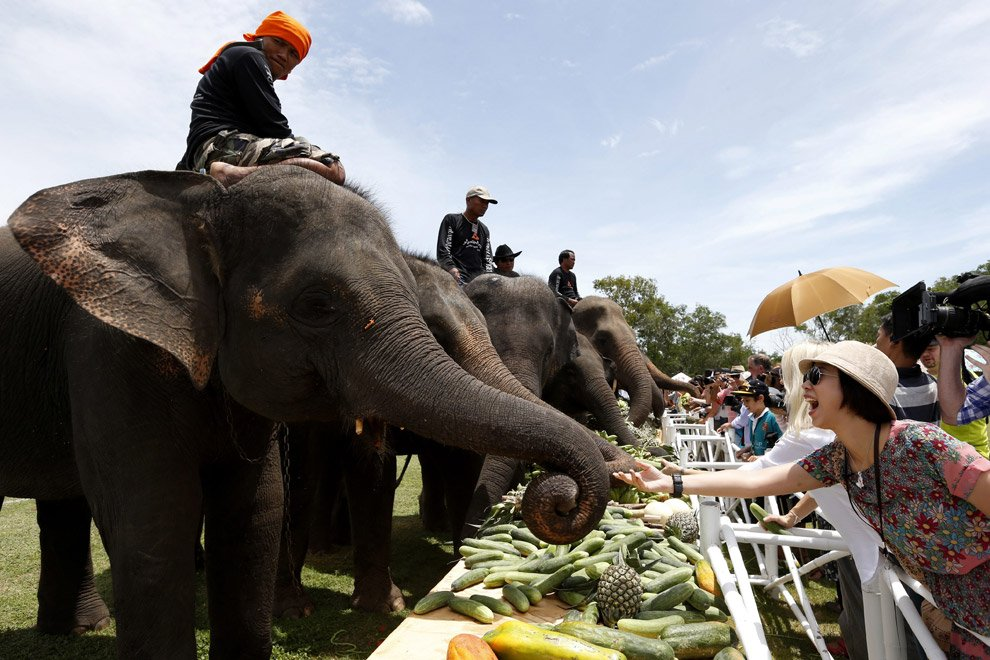 Поло на слонах 2012