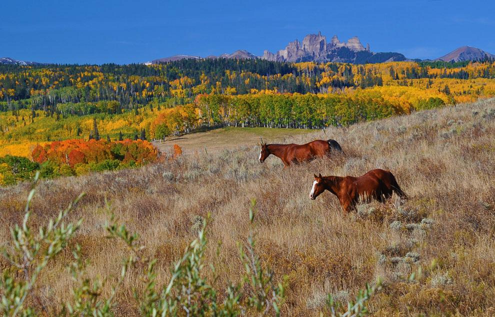 Лошади в американском штате Колорадо