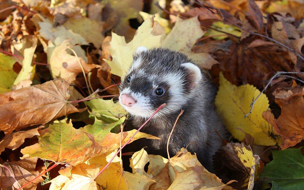 Согласно народной примете, раннее опадание листвы — к ранней зиме