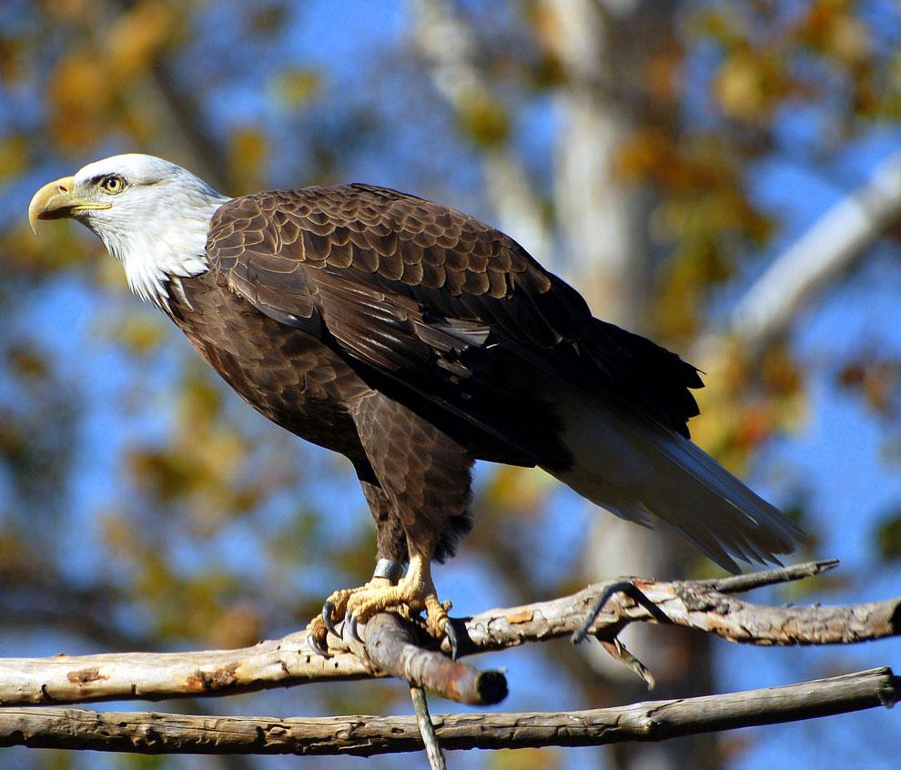 На земном шаре обитает 287 видов хищных птиц