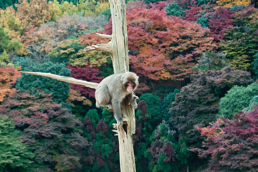 Медитация на дереве в Киото, Япония