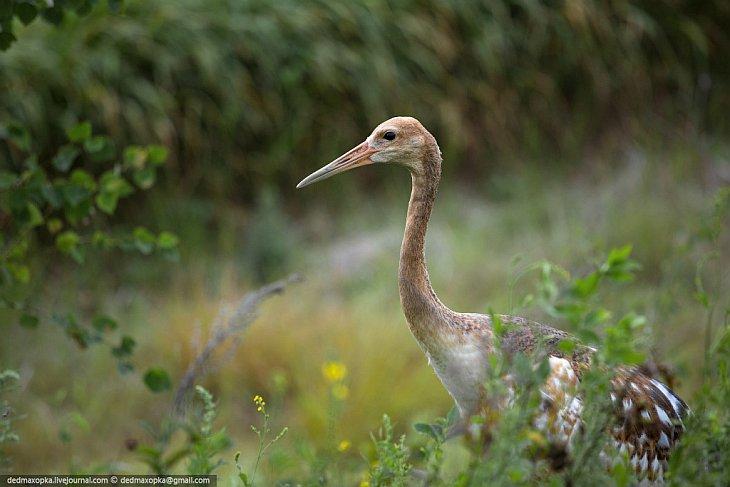 Природные заповедники Амурской области