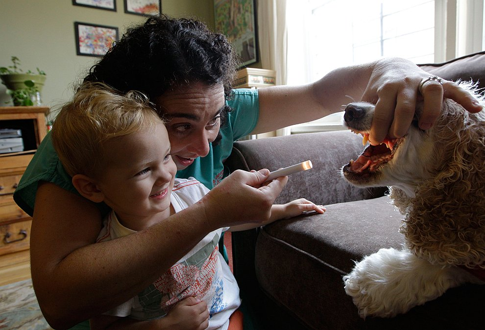 Ветеринарный врач осматривает дома свою собаку
