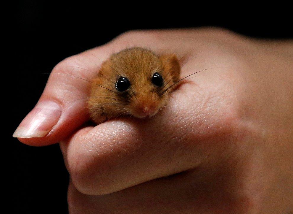 Соня - маленький зверек из отряда грызунов