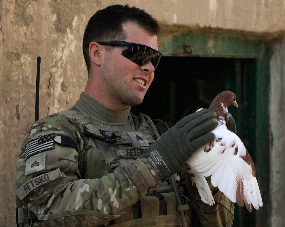 Американский солдат с голубем во время патрулирования