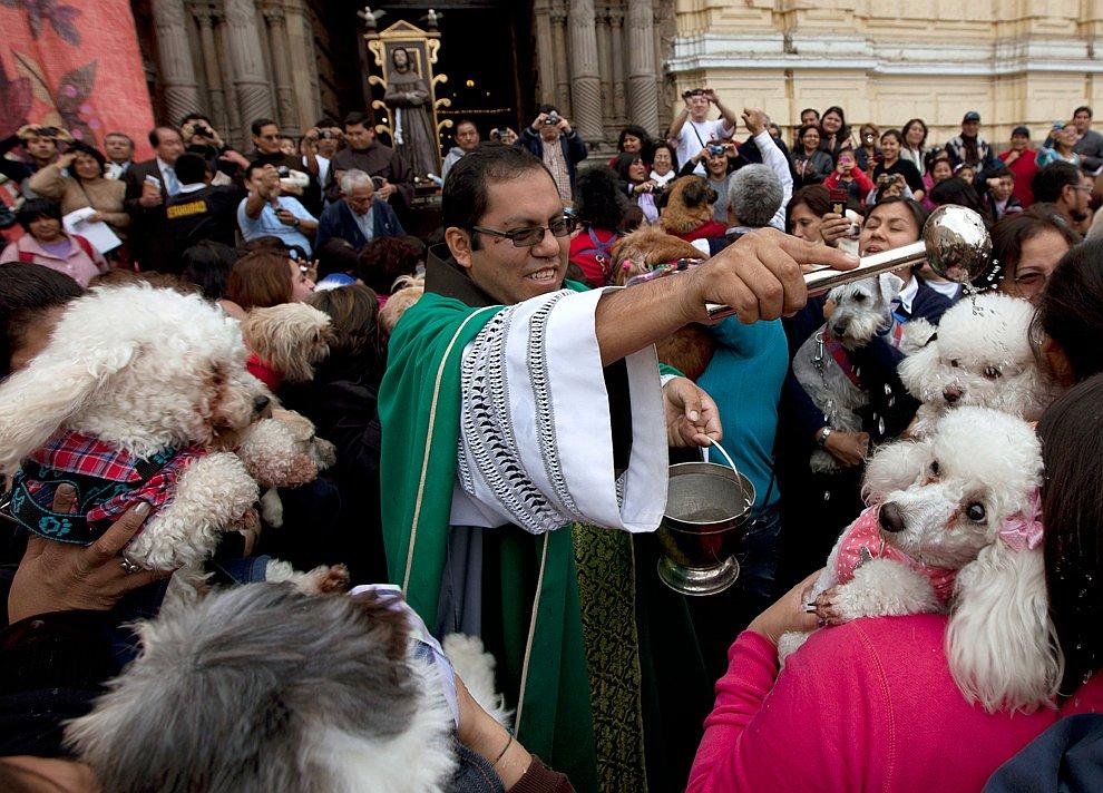 Священник благословляет собак рядом с церковью в Лиме
