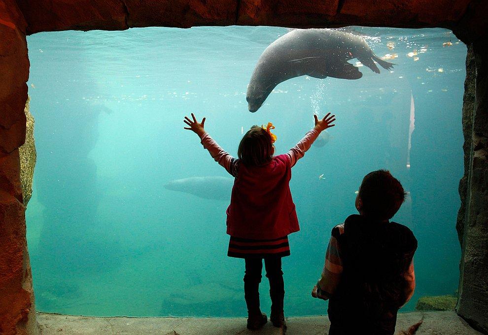Морской лев в зоопарке Франкфурта
